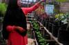 Winaryati Esperansa, Salah satu pengelola kebun Gemah Ripah (2)